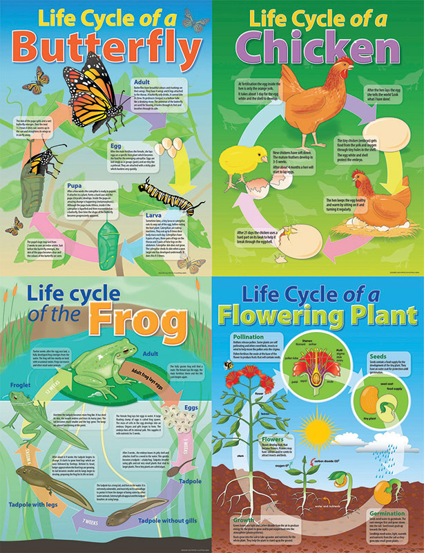 Life Cycle Poster Set Of 4