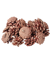 Natural Exploration or Craft Pack - Pine Cones 200g