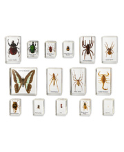 Mini Beasts - Insects & Spiders Large Set