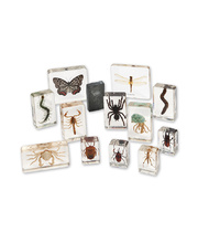 Mini Beasts - Arthropods Large Set