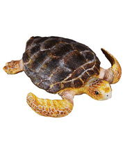 Collecta Sea Life Replica - Loggerhead Turtle 7 x 2cmH