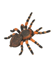 CollectA Insects & Bug Life Replica - Red Knee Tarantula 8 x 3.5cmH