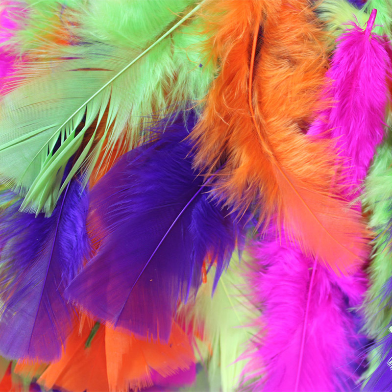Feathers Assorted Fluoro Colours - 250pcs